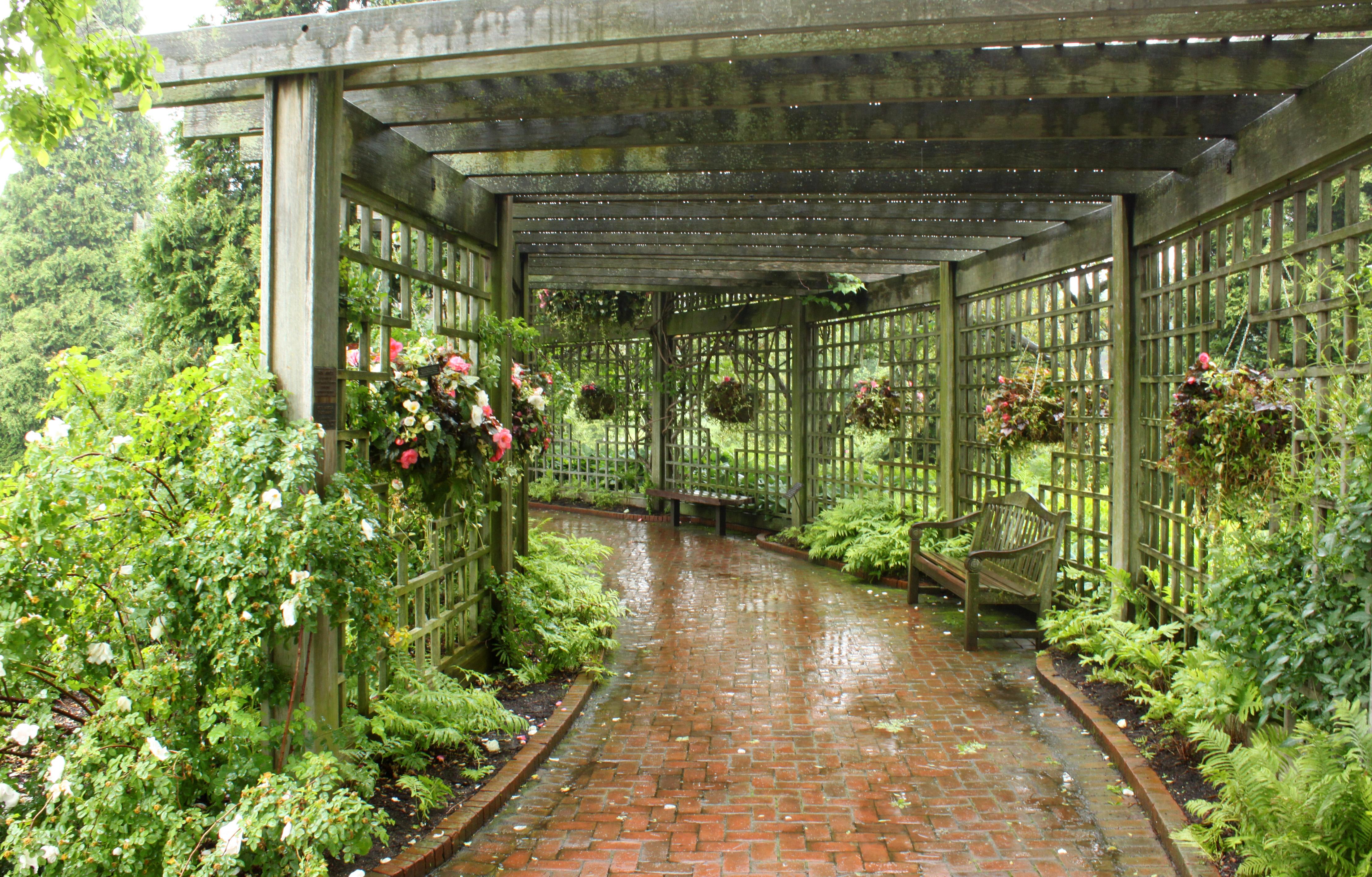 Arbor Plants Ideas